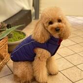 La mia bellissima nipotina Margot indossa un giubbottino con pigiamino firmati FouFou dog ❤Noi abbiamo i clienti più belli 😍#foufoudog #foufoubrands #pet #barboncino #clientisoddisfatti #clientifelici