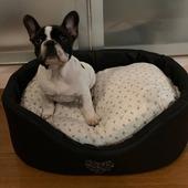Pongo 🐾si prepara a fare la nanna nella xomoda e bella cuccetta Eh Già 🥰#dog #frenchbulldog #cuccia #cucciacane #beddog #accessoricane #clientefelice #clientesoddisfatta #ehgia
