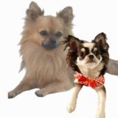 Giornata mondiale del Cane: Muttley & Camilla ❤ #love #dogmodel #mydog #abbigliamentocane #accessoricane