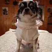 Stupendo maglioncino personalizzato firmato Grace Graciola 💝#pullname #pulldog #pet #dog #instadog #gracegraciola