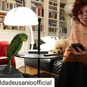 #aldadeusanioofficial #dog #pappagallo #vip #pet
