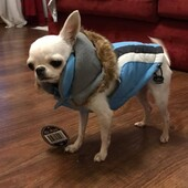 Fighissimo Teo col nuovo giubbottino Swisse Alpine di Hip Doggie 😍#giubbottocane #cappottinocane #hipdoggie #cane #dog #pet #lovedog #lovepet