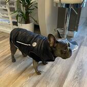 Coco indossa l'Artic Teck Parka di FouFou Dog, noi amiamo i nostri clienti! 🥰 #foufoudog #bulldog #bulldogfrancese #clientesoddisfatta #clientefelice #lovedog #coat