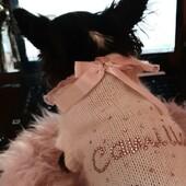 Da Code alla Moda troverete un servizio assistenza impeccabile... la nostra Camilla, instancabile al centralino, risponde ogni giorno alle chiamate dei suoi amici Bau e Miao. 🐶🐱🎧📞☎️🖥💻#centralino#servizioassistenza #bau #miao #abbigliamentocane #abbigliamentogatto #accessori #boutiqueonline #dog #pet #ecommerce #boutiqueonline #petboutique