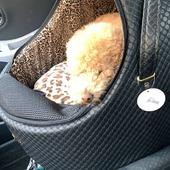 Giotto, comodo nel trasportino per auto firmato Eh Gia' ❤ #barboncino #carigloo #trasportinoauto #clientesoddisfatta #ehgia