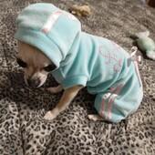 Bellissima la piccola Brioche con la tutina Piccoli Pets 🥰❤#chihuahua #dog #pet #clientesoddisfatta #clientefelice #piccolipets